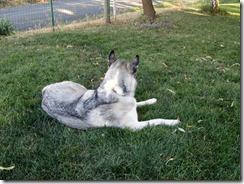 Kaya relaxing
