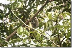 Sloth in trere