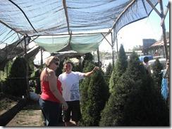 Heidi buying tree (1)