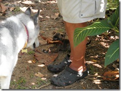 Puppy with big leaf