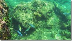 Snorkeling at Punta Uva 1