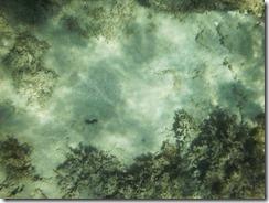 Camouflage fish 2