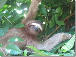 Christmas Eve Sloth